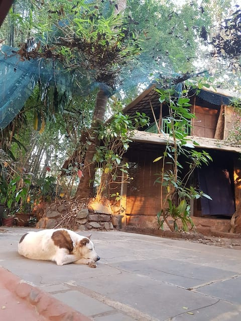 Pet friendly eco-resort, ideal Pawcation Location