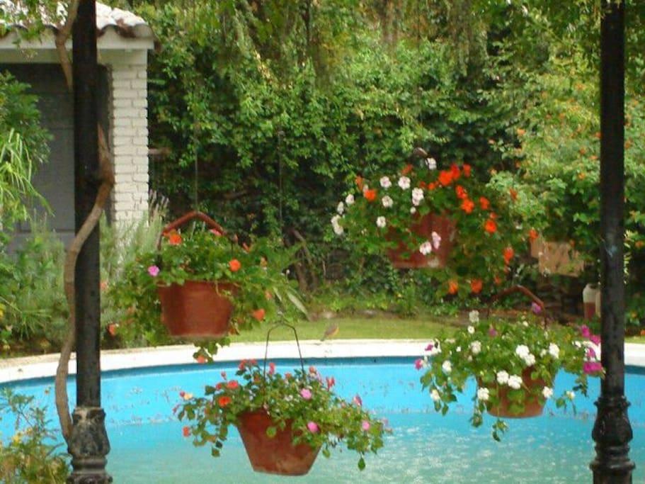 Flores y agua