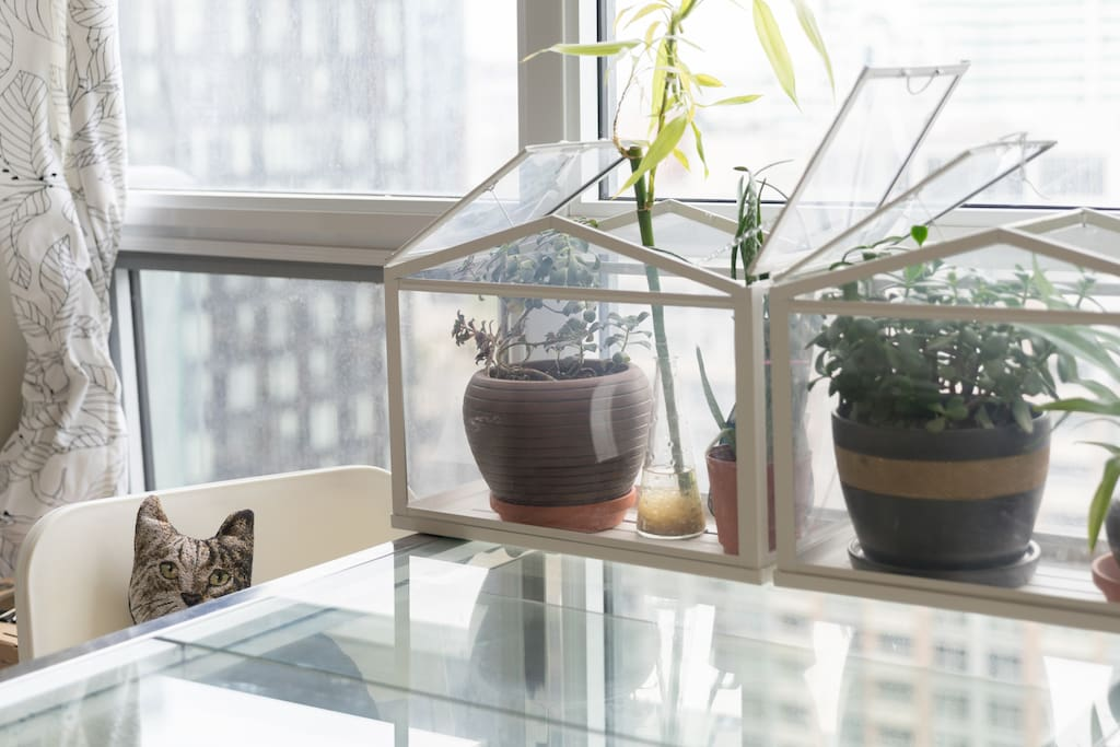 Lots of indoor plants, high-rise view and unique decors
