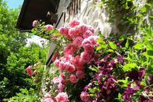 Frond garden