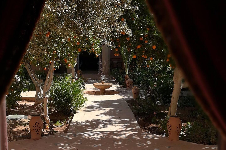 vue sur les orangers du patio