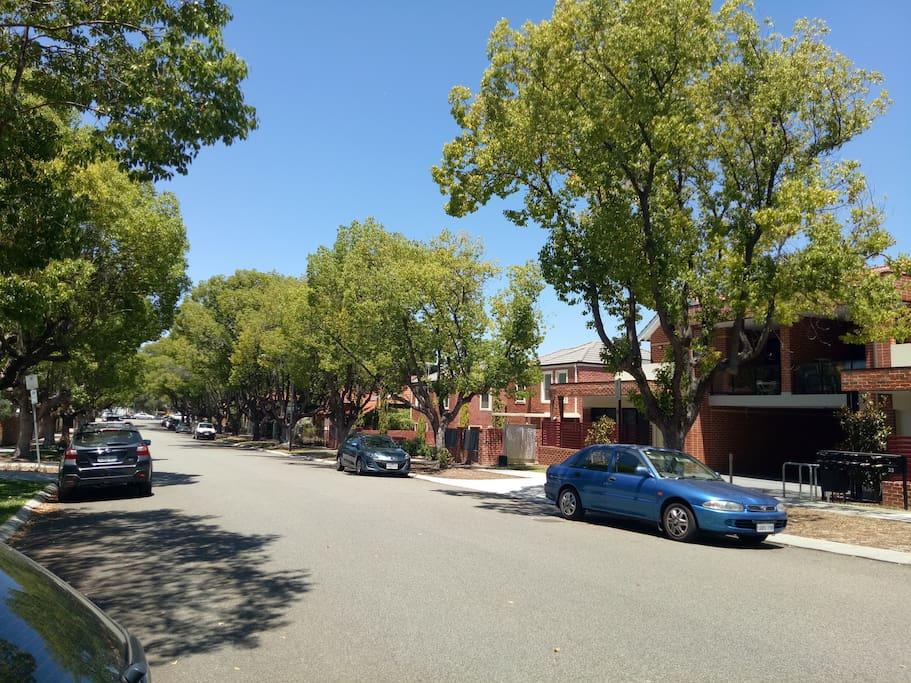 Quiet tree lined street