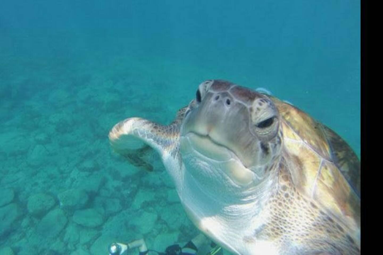 En el muelle  se puede ver tortuga y nadar con ellas.
