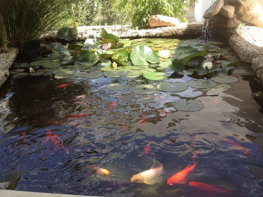 Fish pond at entrance