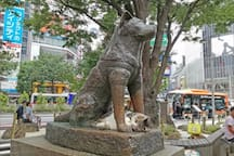 Shibuya Sta. 5mins on foot☆Great Access! #2