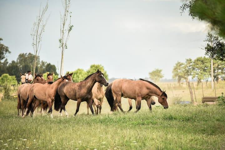 Alojamiento en Pulpería de campo Argentina
