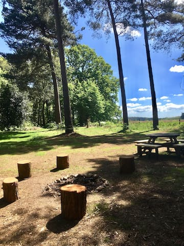 Country farm for camping (fir woods)