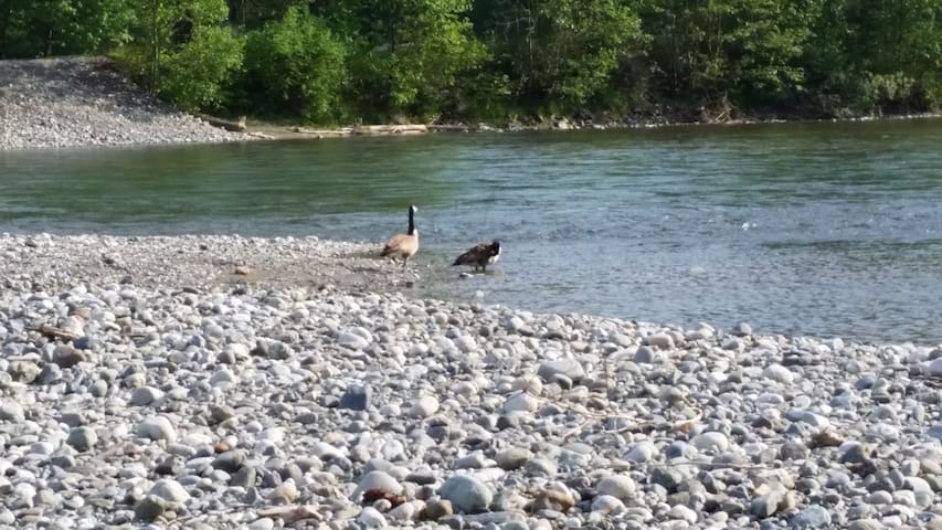 Relax and fish on the vedder river only 10 minute drive