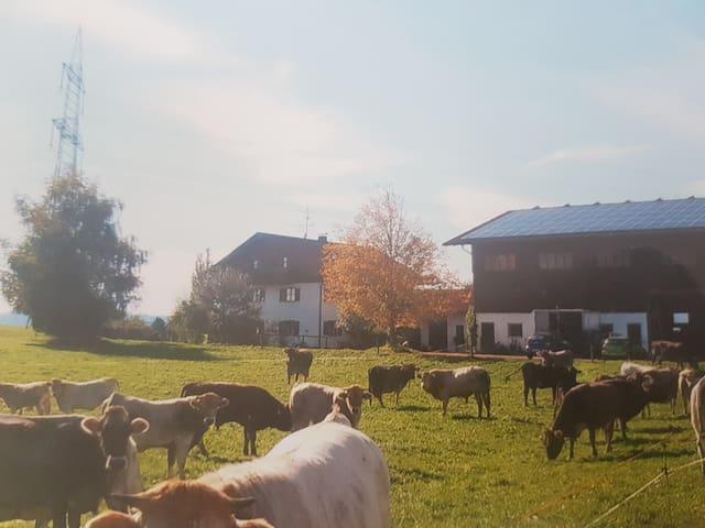 Allgäuer Stubn