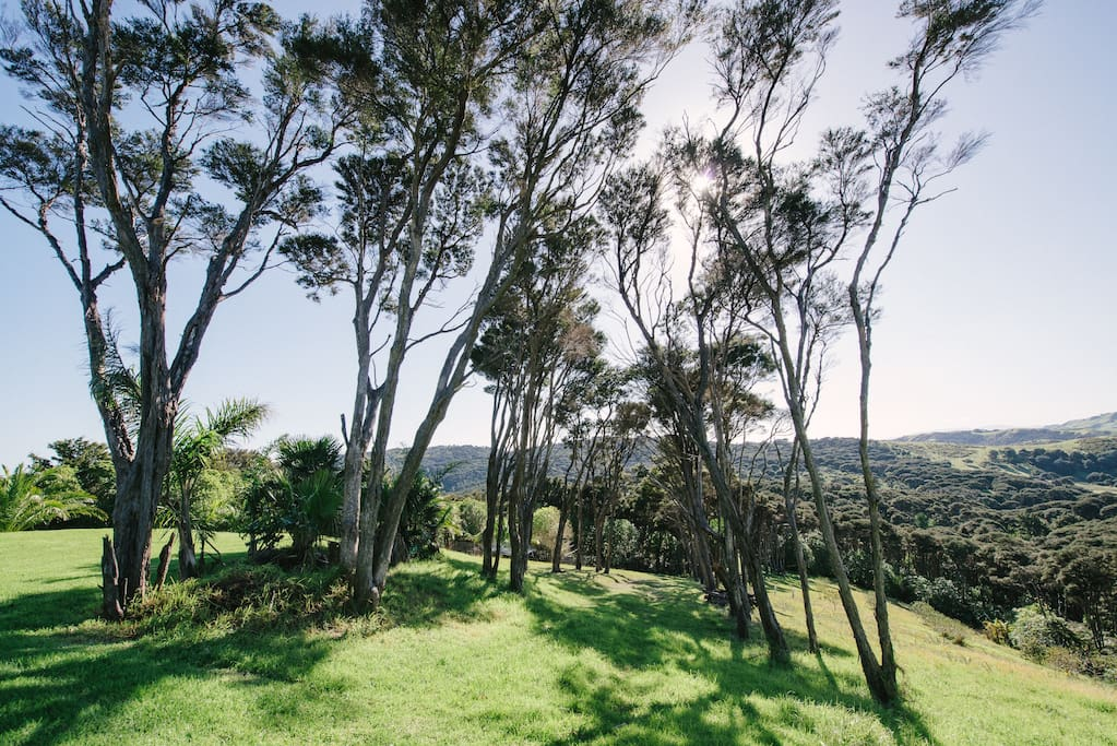 Property views with bush walks, walkable to 2 local vineyards
