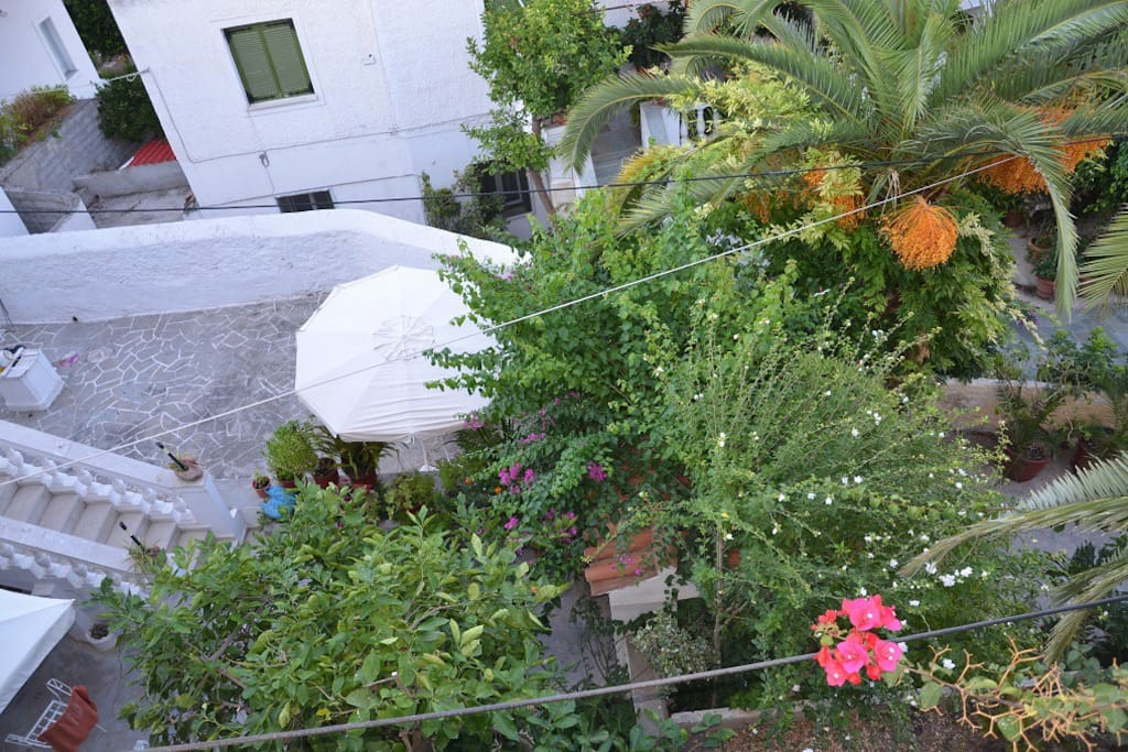Garden view from the balcony