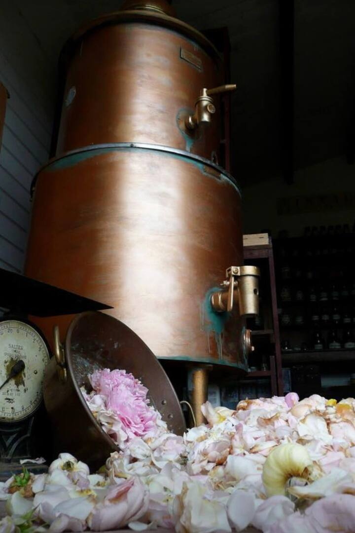 Our big still with the Rose havest
