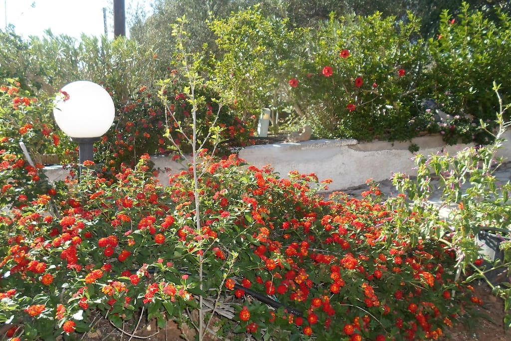 Hibiscus Tersanas Chania Beach House Houses For Rent In