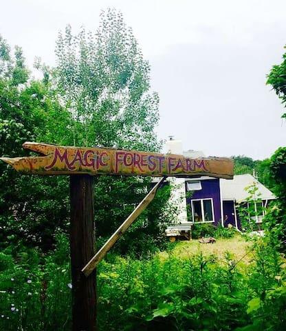 Magic Forest Farm - Beautiful Pitch Site No. 7