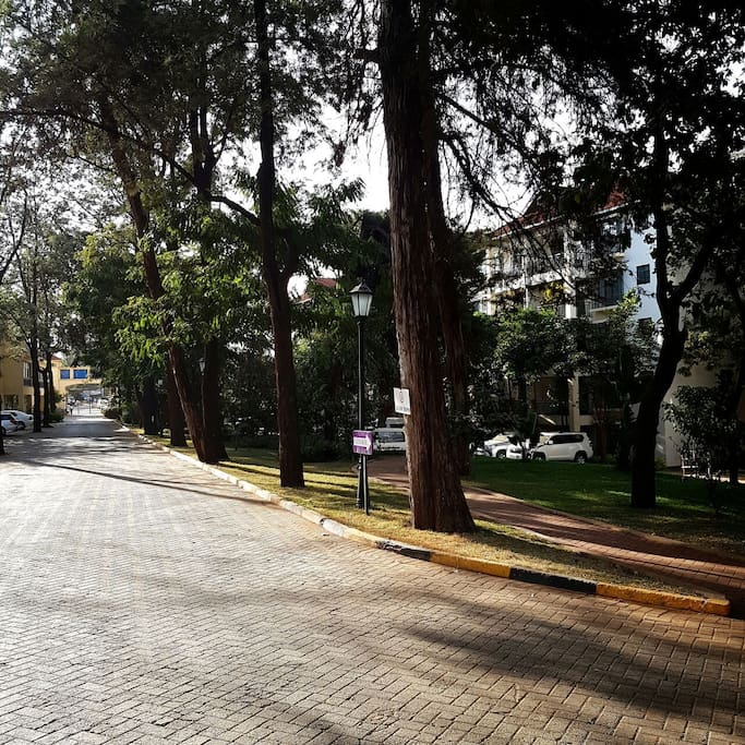 Take a relaxing walk along the tree - lined street.