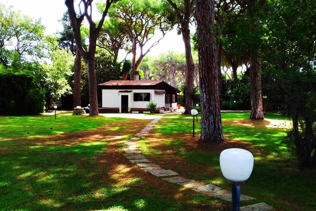 """The outside is a 5000 m2 pinewood, inside the """"Pineta di Statua"""" Natural Park"""
