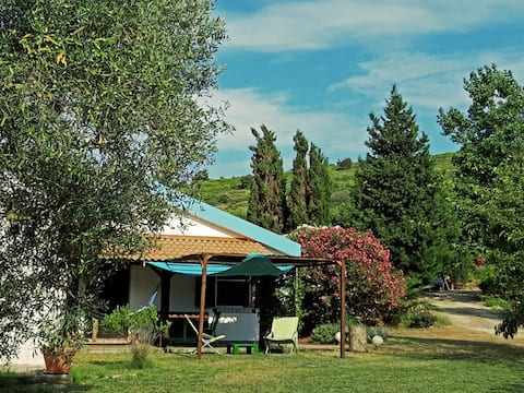 little house among olive trees