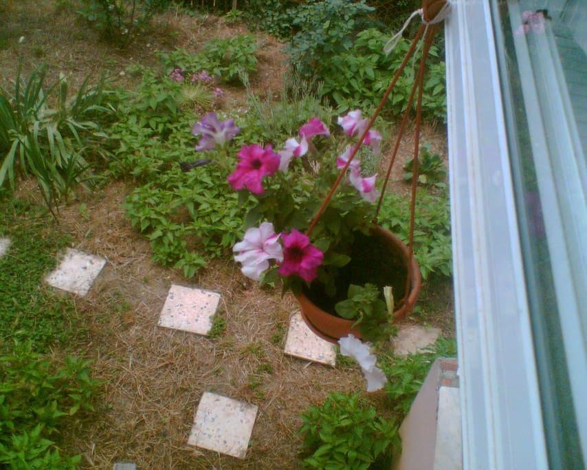 The garden of the home.