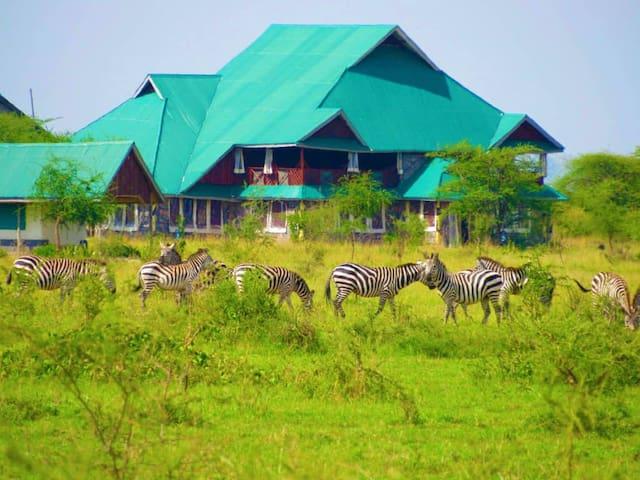 Zebra Kemang'ore Tripple Bed Luxury Tent