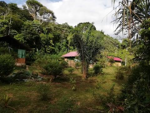 EcoManu Lodge & Eco Amazon Lodge in Manu Biosphere