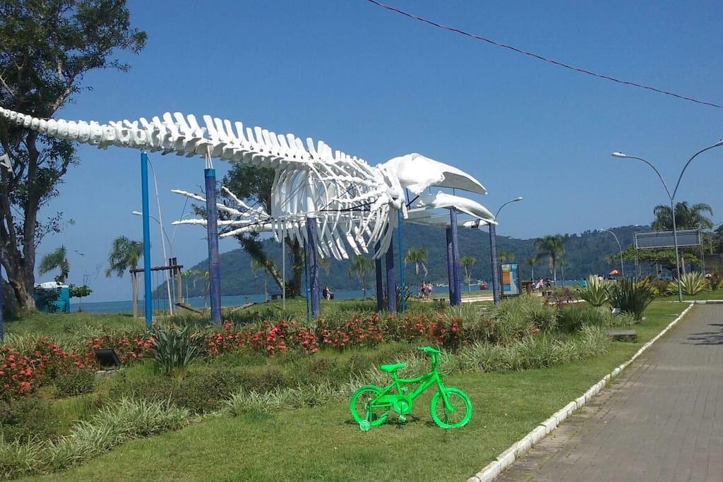 praça da baleia próxima a casa