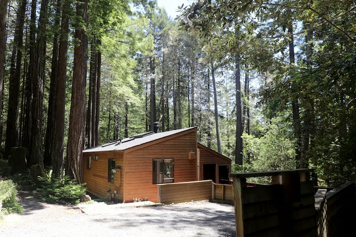 Private, dog friendly 3 bedroom bright wooded home