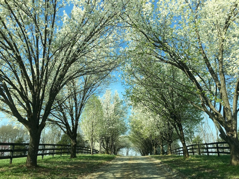 Spring has sprung on the farm, and this is how it's greets you- Welcome to Green Springs!!