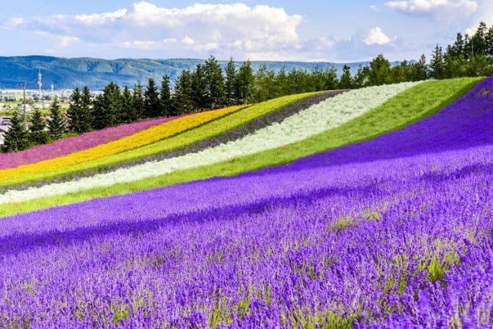 Furano lavender & Ski resorts completely private