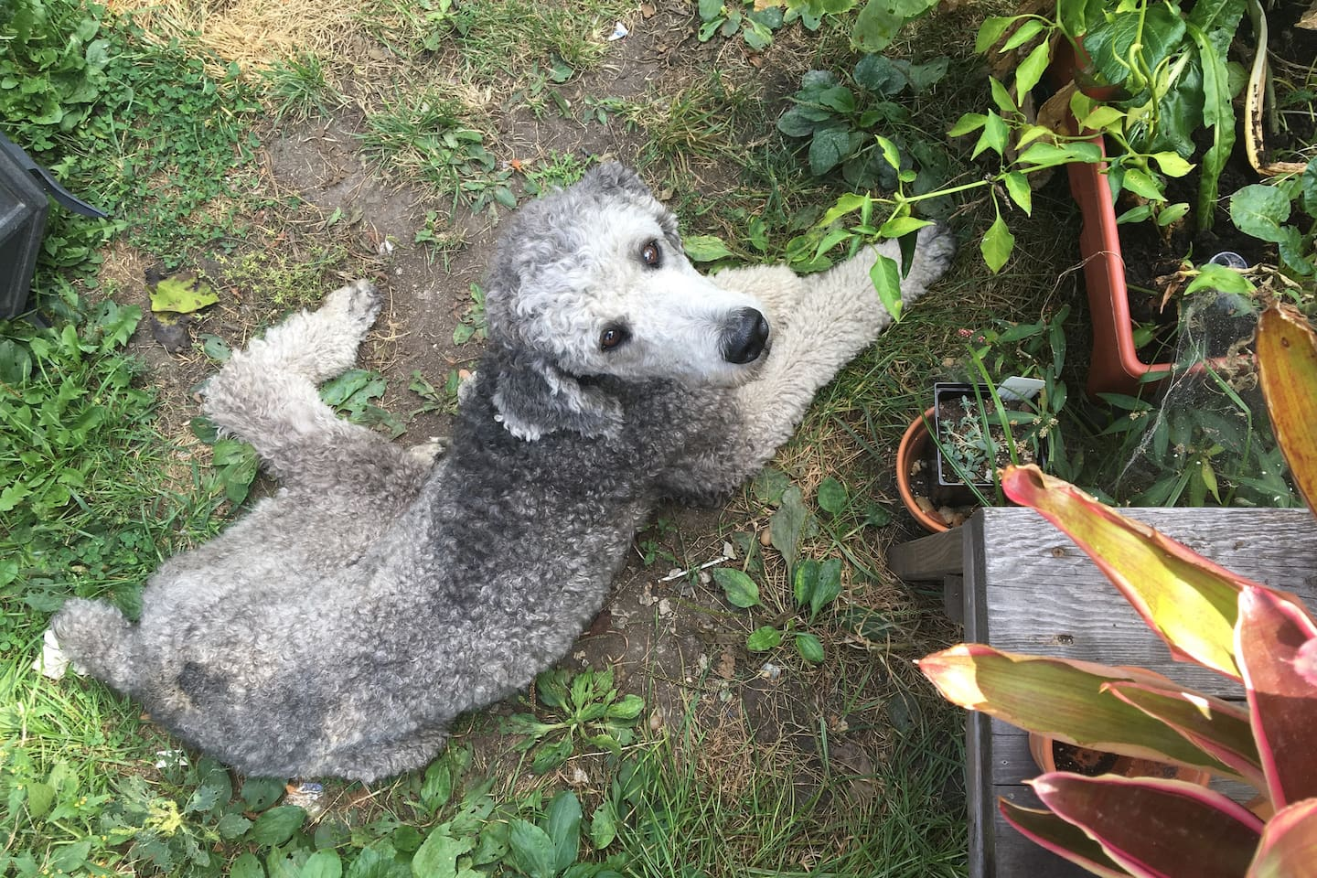 We have two standard poodles that you'll regularly find napping or play-fighting in the yard.
