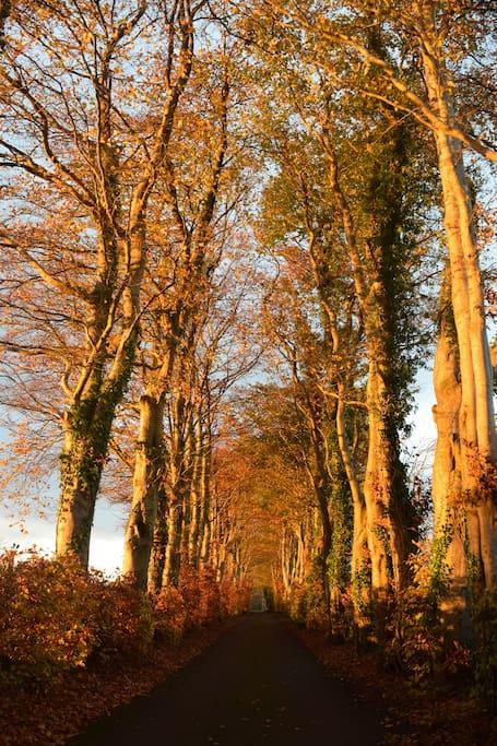 Na fálta dochra beaga - the wee dark hedges
