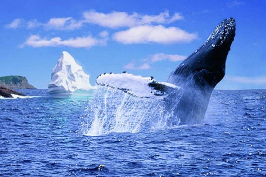 Whales and Icebergs!