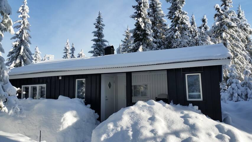Hytte på Budor- Hedmarksvidda-flotte skiløyper - Stange