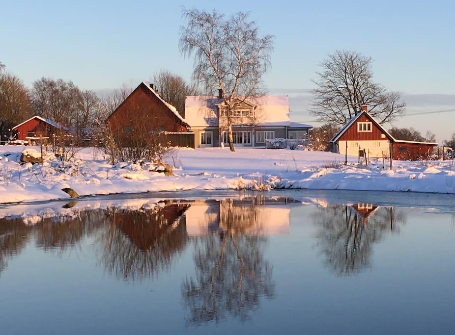 Dammen i vinterskrud