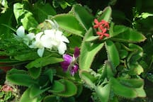 campus flowers