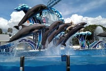 SeaWorld in same neighborhood. 10 minutes walking distance.