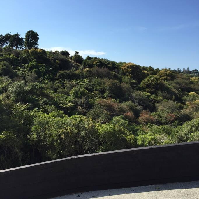 Look outs across Kepa bush