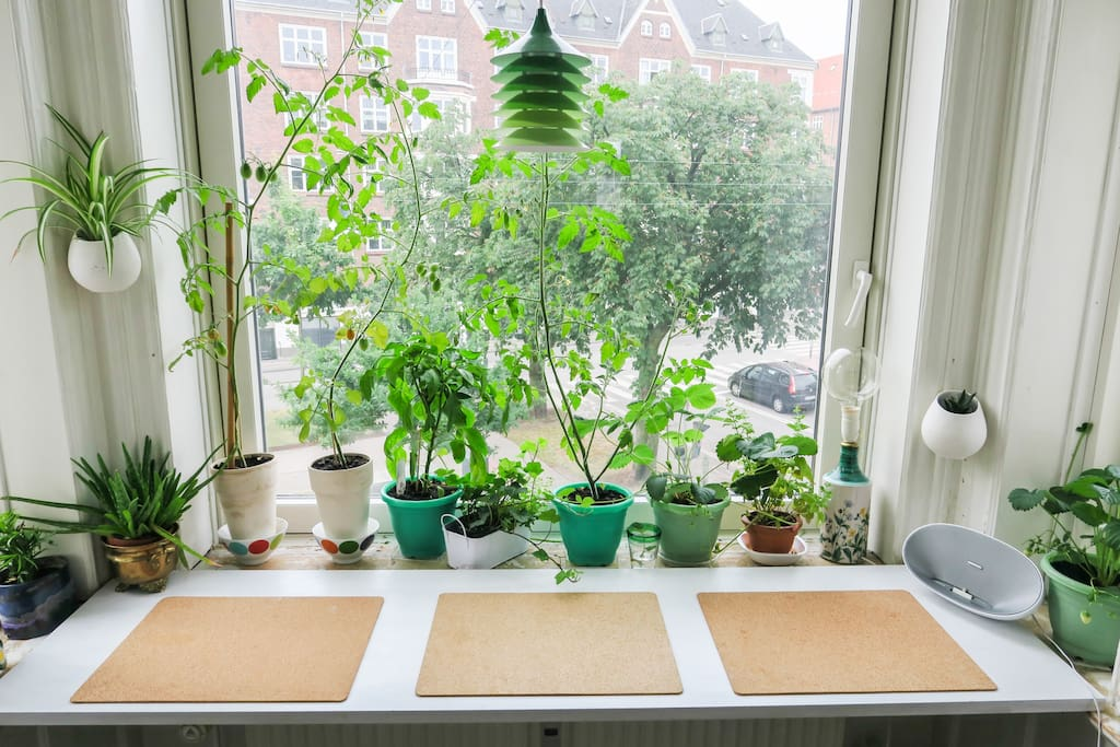 Window table with a view.