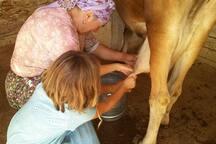 Sevgi Ana çocuklara da sütünü sağdırır