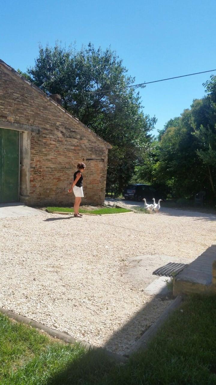Country House gli olivi e la Riviera del Conero