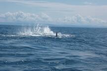 avistamiento de ballenas.