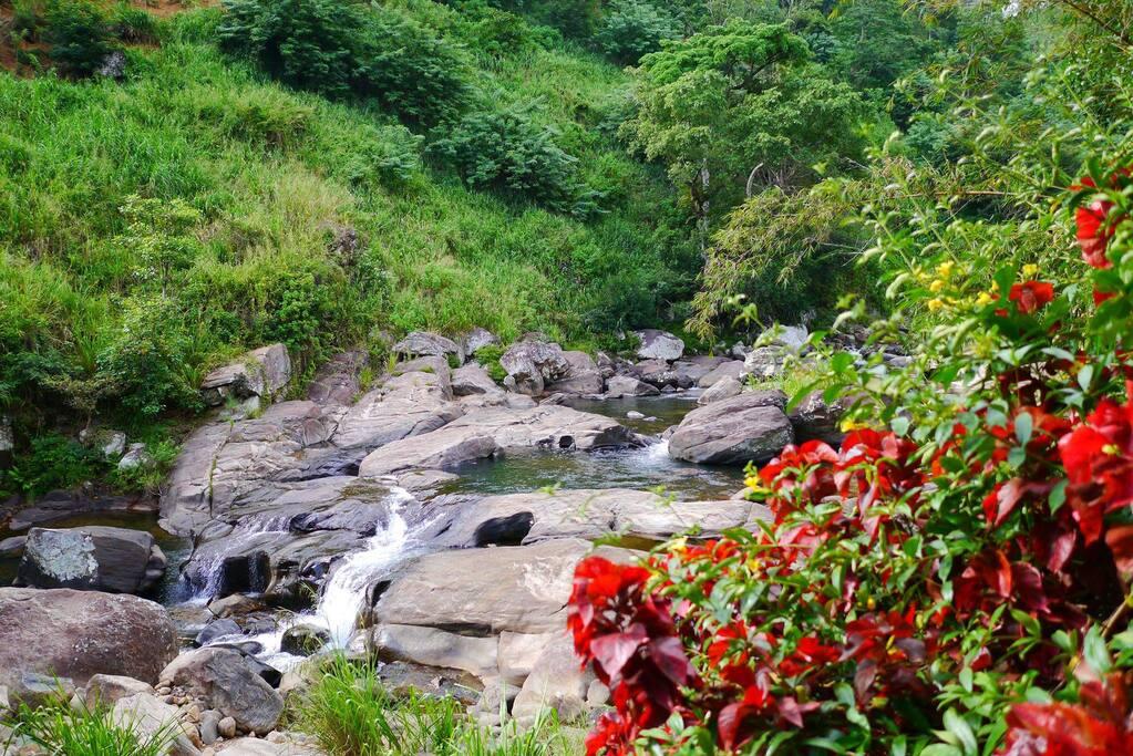 Stream Nature