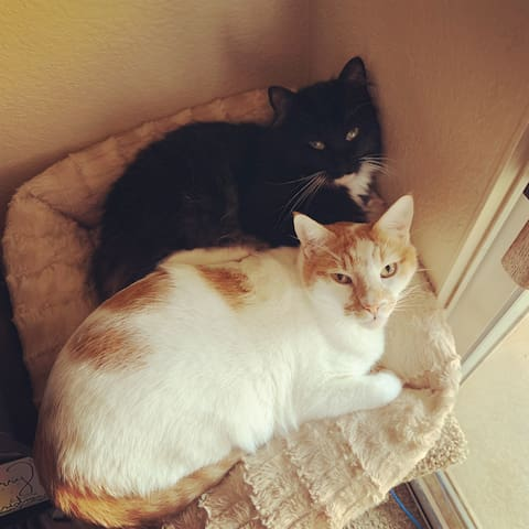 Our kitties, Oliver (orange and white) and Pip (black and white)