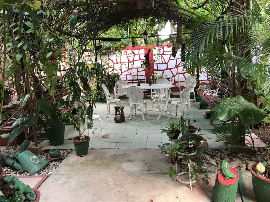 Quiet garden ,perfect place for breakfasts in the morning,small paradise full of plants ,birds and flowers in the heart of the city.