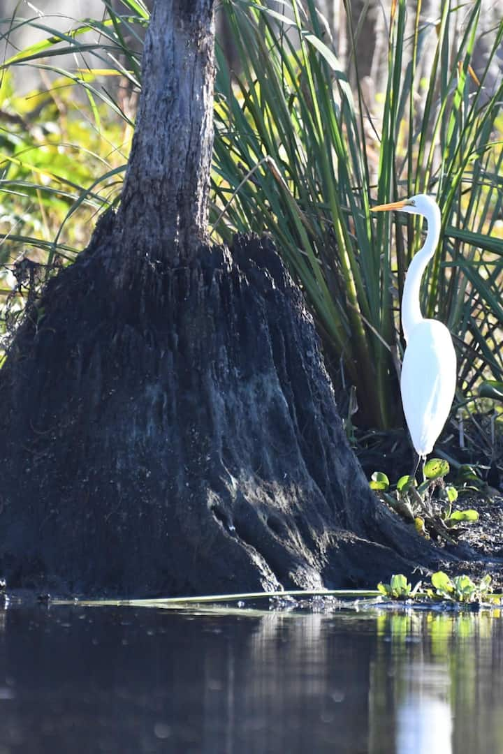 Great wildlife viewing opportunities