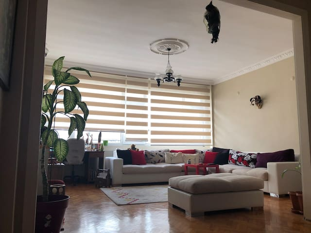 Spacious apartment in the centre of the city