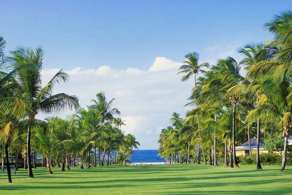The signature Avenue of the Palms at Nisbet Plantation leads from the Great House to the beach.