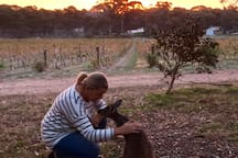 Experience a memorable Australian scene.