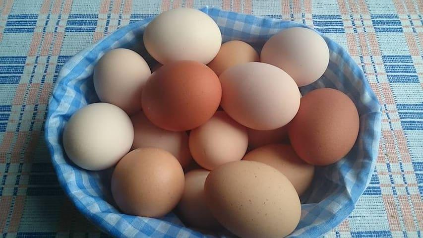 Lantgård i Stärkesmark - Vännäs - Bed & Breakfast