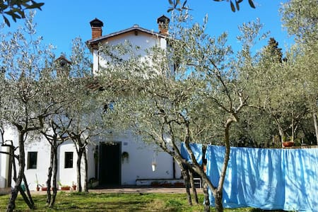Lovely peaceful house in nature - Greve in Chianti - Apartment - 0