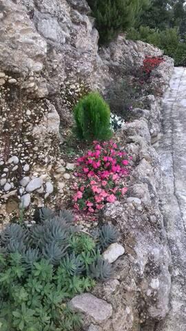 Casale in pietra tra gli ulivi della sabina